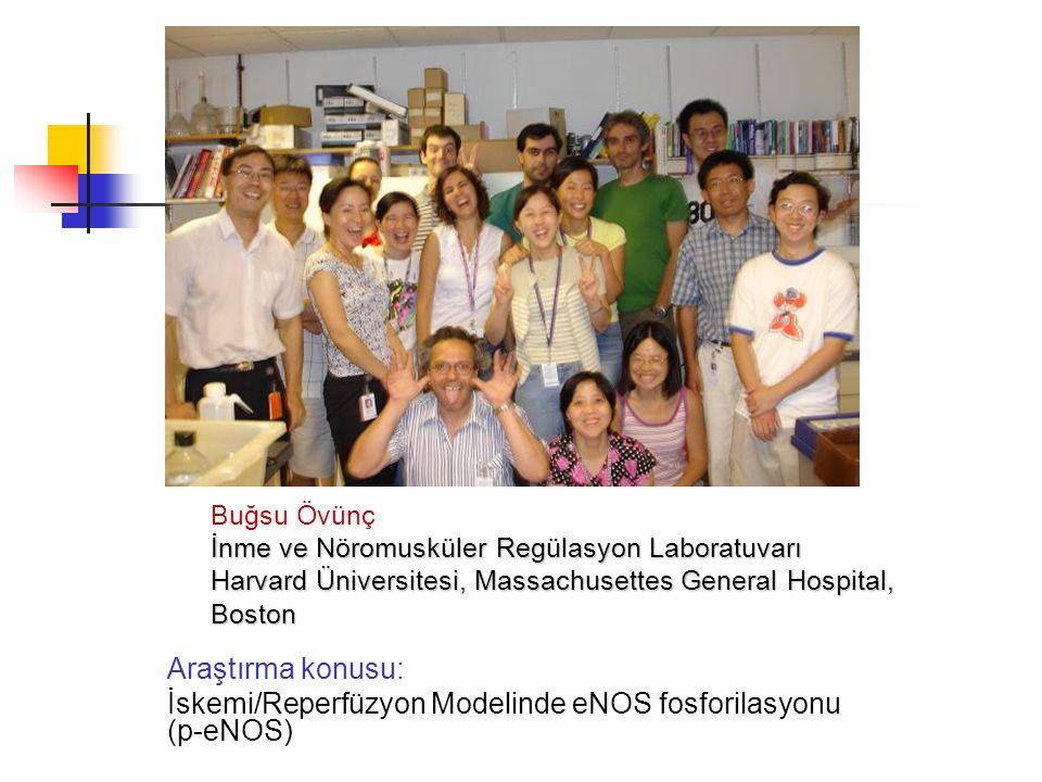Araştırma konusu: İskemi/Reperfüzyon Modelinde eNOS fosforilasyonu (p-eNOS) Buğsu Övünç İnme ve Nöromusküler Regülasyon Laboratuvarı Harvard Üniversitesi, Massachusettes General Hospital, Boston
