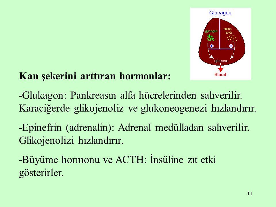 11 Kan şekerini arttıran hormonlar: -Glukagon: Pankreasın alfa hücrelerinden salıverilir. Karaciğerde glikojenoliz ve glukoneogenezi hızlandırır. -Epi