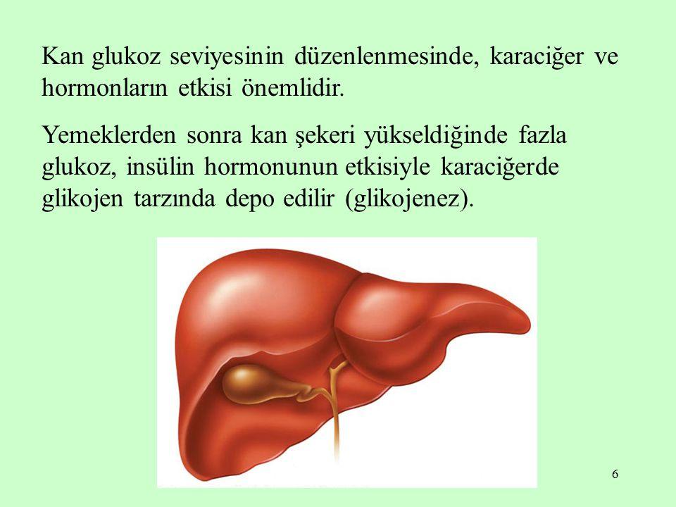 6 Kan glukoz seviyesinin düzenlenmesinde, karaciğer ve hormonların etkisi önemlidir. Yemeklerden sonra kan şekeri yükseldiğinde fazla glukoz, insülin