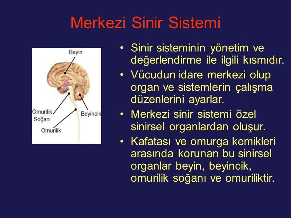 Merkezi Sinir Sistemi Sinir sisteminin yönetim ve değerlendirme ile ilgili kısmıdır. Vücudun idare merkezi olup organ ve sistemlerin çalışma düzenleri