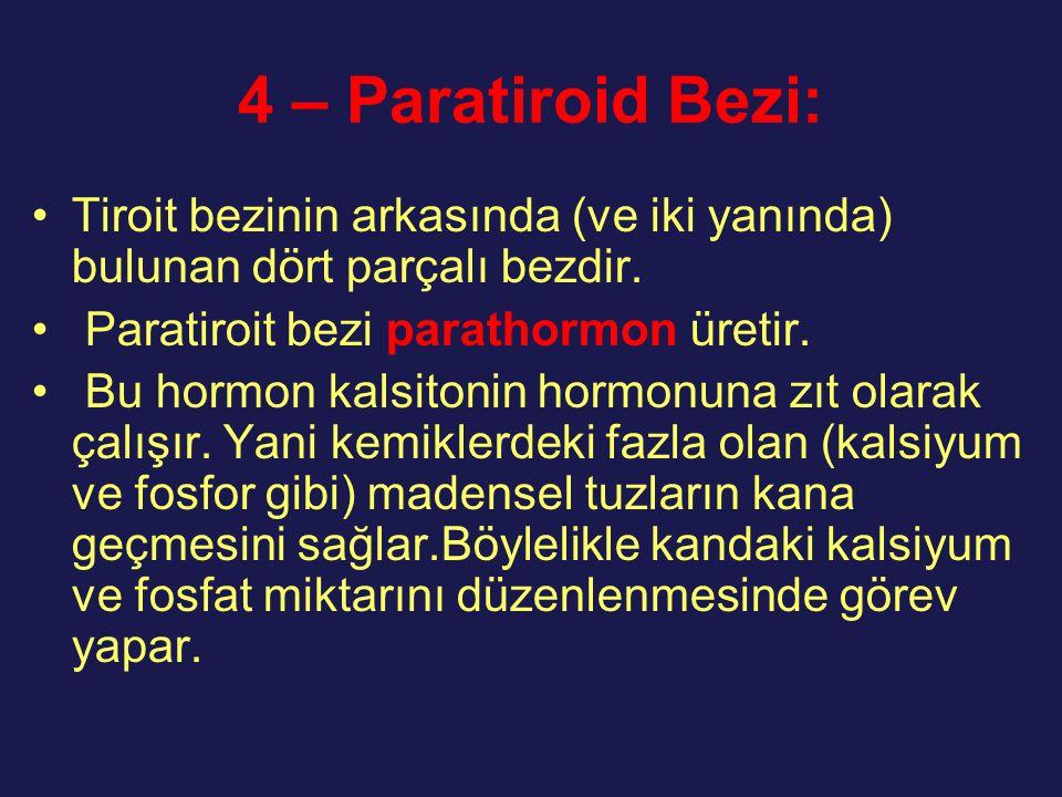4 – Paratiroid Bezi: Tiroit bezinin arkasında (ve iki yanında) bulunan dört parçalı bezdir. Paratiroit bezi parathormon üretir. Bu hormon kalsitonin h