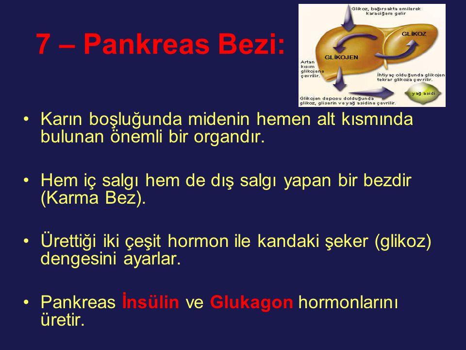 7 – Pankreas Bezi: Karın boşluğunda midenin hemen alt kısmında bulunan önemli bir organdır. Hem iç salgı hem de dış salgı yapan bir bezdir (Karma Bez)