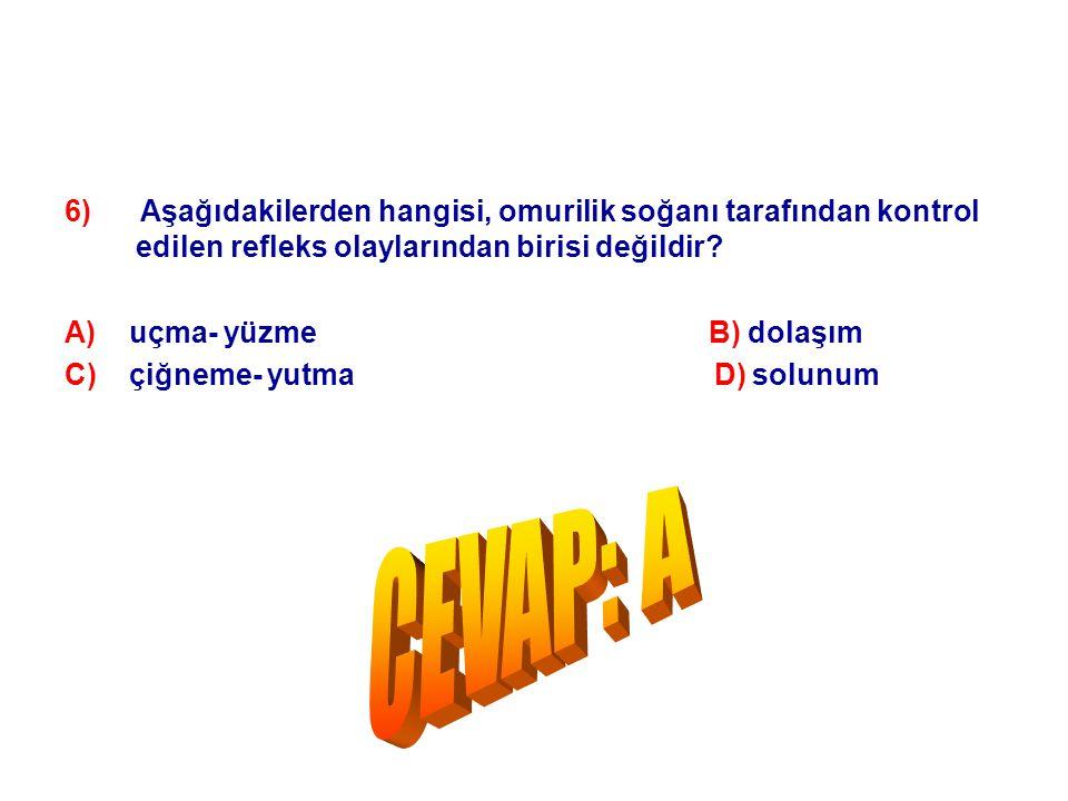 6) Aşağıdakilerden hangisi, omurilik soğanı tarafından kontrol edilen refleks olaylarından birisi değildir? A) uçma- yüzme B) dolaşım C) çiğneme- yutm