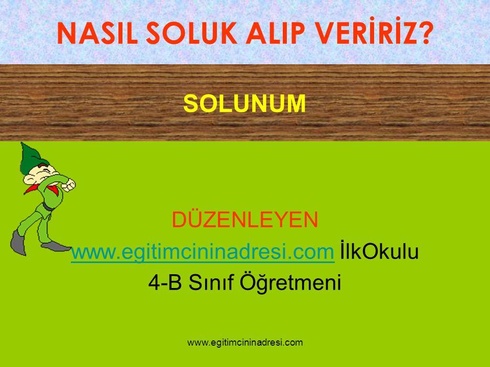 SOLUNUM DÜZENLEYEN www.egitimcininadresi.comwww.egitimcininadresi.com İlkOkulu 4-B Sınıf Öğretmeni NASIL SOLUK ALIP VERİRİZ? www.egitimcininadresi.com