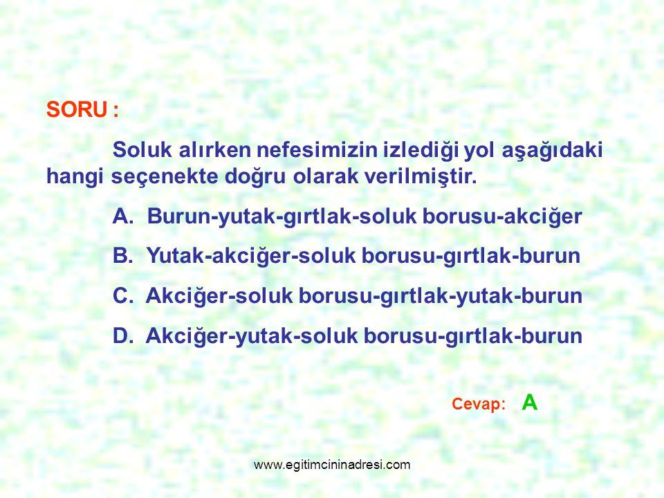 SORU: Soluk alırken nefesimizin izlediği yol aşağıdaki hangi seçenekte doğru olarak verilmiştir. A. Burun-yutak-gırtlak-soluk borusu-akciğer B. Yutak-
