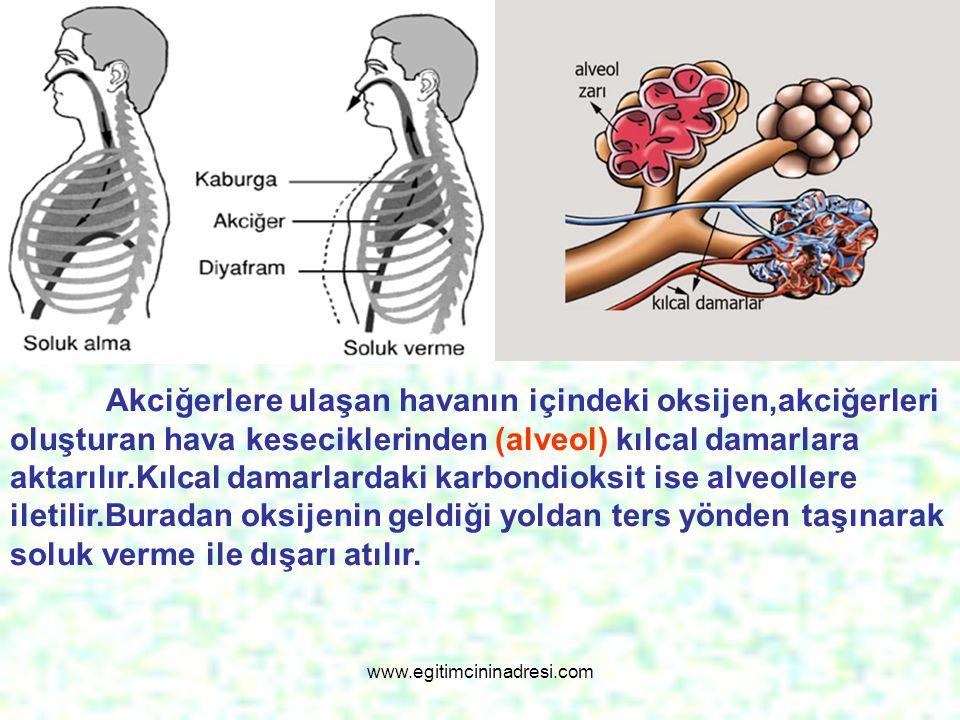Akciğerlere ulaşan havanın içindeki oksijen,akciğerleri oluşturan hava keseciklerinden (alveol) kılcal damarlara aktarılır.Kılcal damarlardaki karbond