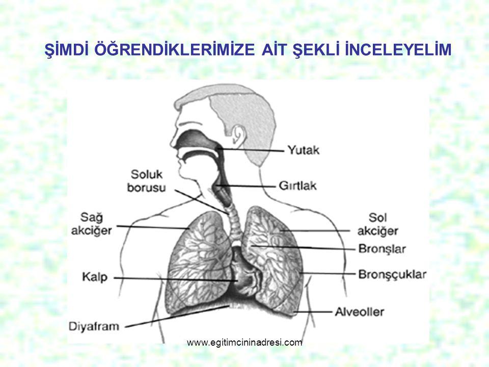 Şimdi de ne kadar öğrendiğimizi ölçelim Aşağıda belirtilen görevleri ilgili organlarla eşleştirelim Burun Gırtlak Soluk borusu Yutak akciğer 1.Gaz (hava) alıp vermenin gerçekleştiği yerdir.