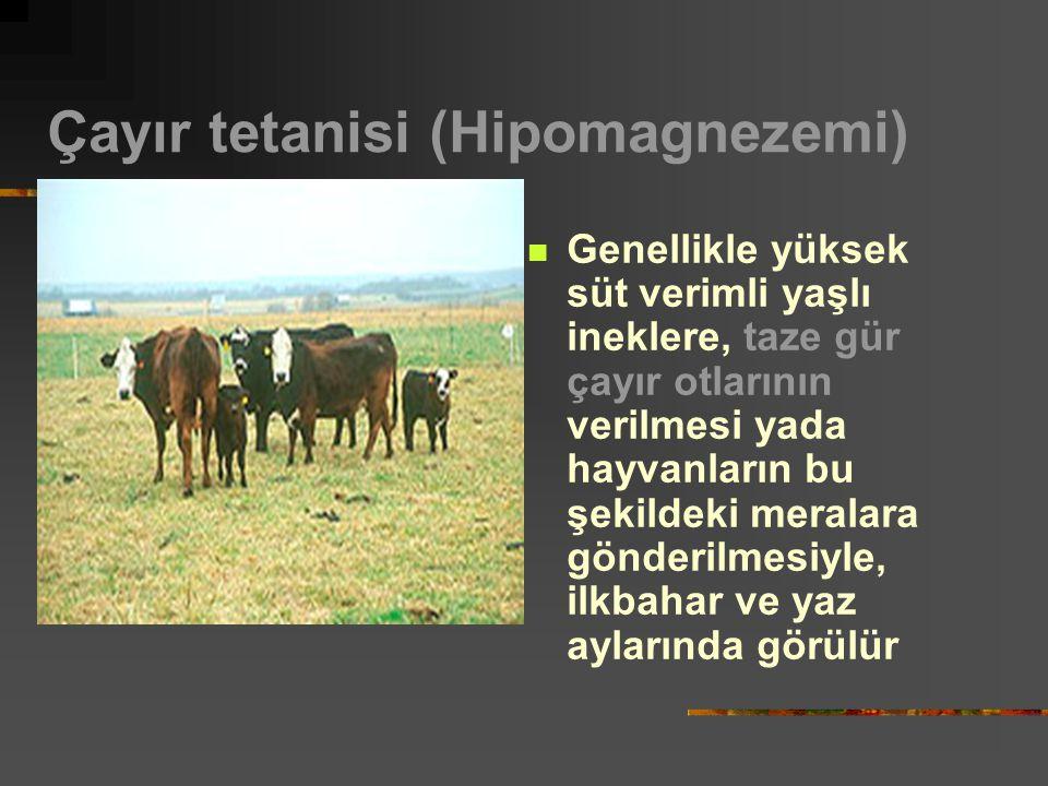 Çayır tetanisi (Hipomagnezemi) Genellikle yüksek süt verimli yaşlı ineklere, taze gür çayır otlarının verilmesi yada hayvanların bu şekildeki meralara gönderilmesiyle, ilkbahar ve yaz aylarında görülür