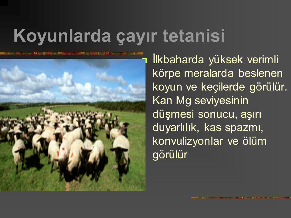 Koyunlarda çayır tetanisi İlkbaharda yüksek verimli körpe meralarda beslenen koyun ve keçilerde görülür. Kan Mg seviyesinin düşmesi sonucu, aşırı duya