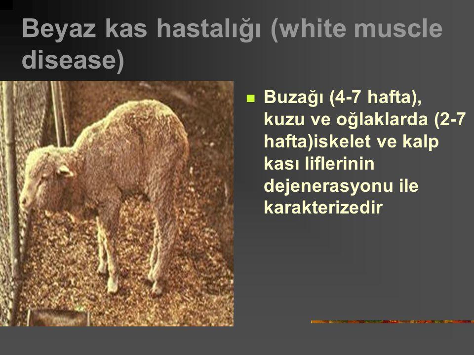 Beyaz kas hastalığı (white muscle disease) Buzağı (4-7 hafta), kuzu ve oğlaklarda (2-7 hafta)iskelet ve kalp kası liflerinin dejenerasyonu ile karakterizedir