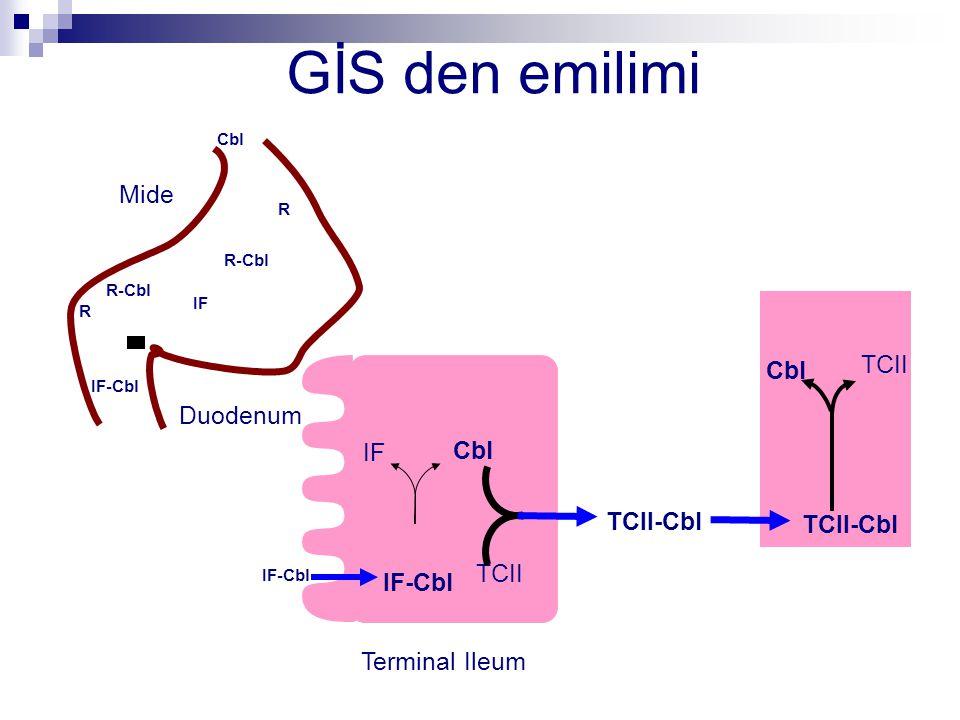 GİS den emilimi IF R Cbl R-Cbl R IF-Cbl TCII IF Cbl TCII-Cbl Cbl TCII Mide Duodenum Terminal Ileum