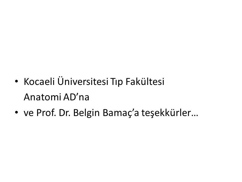 Kocaeli Üniversitesi Tıp Fakültesi Anatomi AD'na ve Prof. Dr. Belgin Bamaç'a teşekkürler…