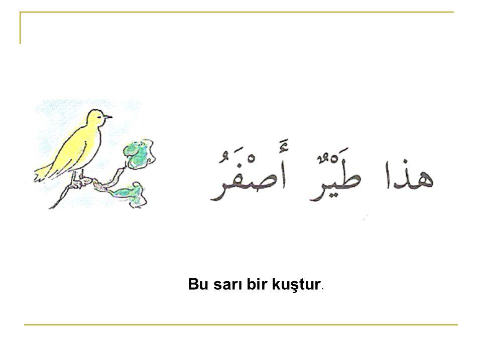Bu sarı bir kuştur.