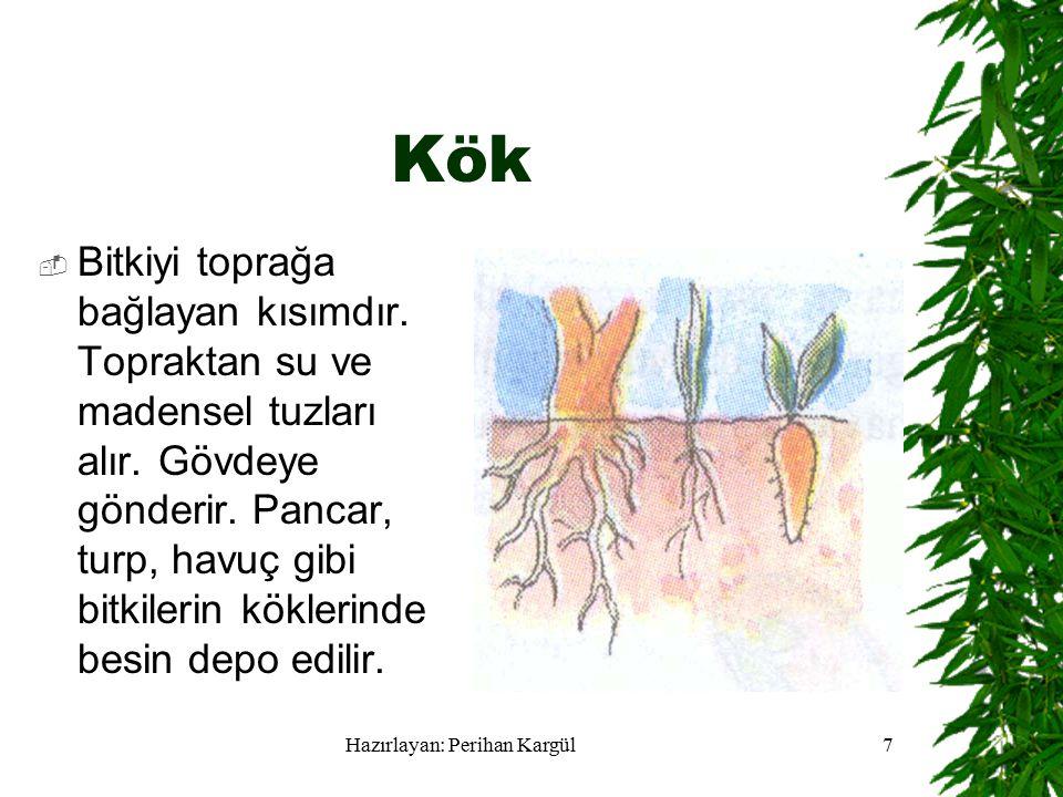 Hazırlayan: Perihan Kargül7 Kök  Bitkiyi toprağa bağlayan kısımdır.