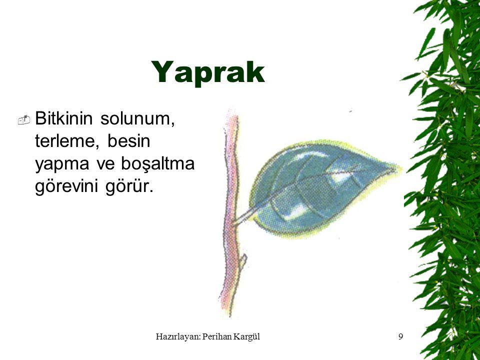 Hazırlayan: Perihan Kargül9 Yaprak  Bitkinin solunum, terleme, besin yapma ve boşaltma görevini görür.
