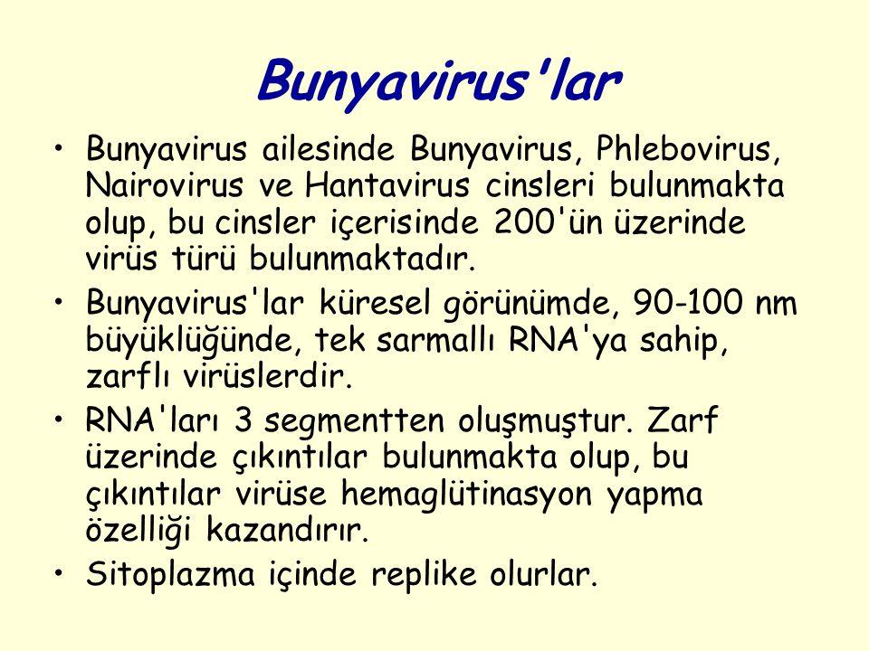Bunyavirus'lar Bunyavirus ailesinde Bunyavirus, Phlebovirus, Nairovirus ve Hantavirus cinsleri bulunmakta olup, bu cinsler içerisinde 200'ün üzerinde