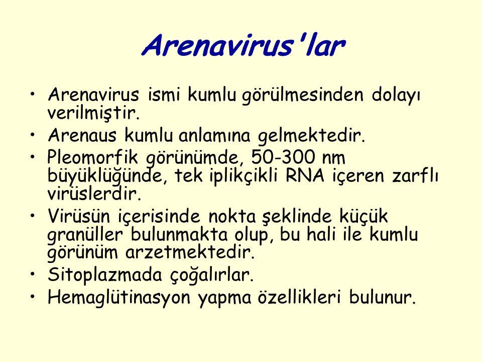 Arenavirus'lar Arenavirus ismi kumlu görülmesinden dolayı verilmiştir. Arenaus kumlu anlamına gelmektedir. Pleomorfik görünümde, 50-300 nm büyüklüğünd