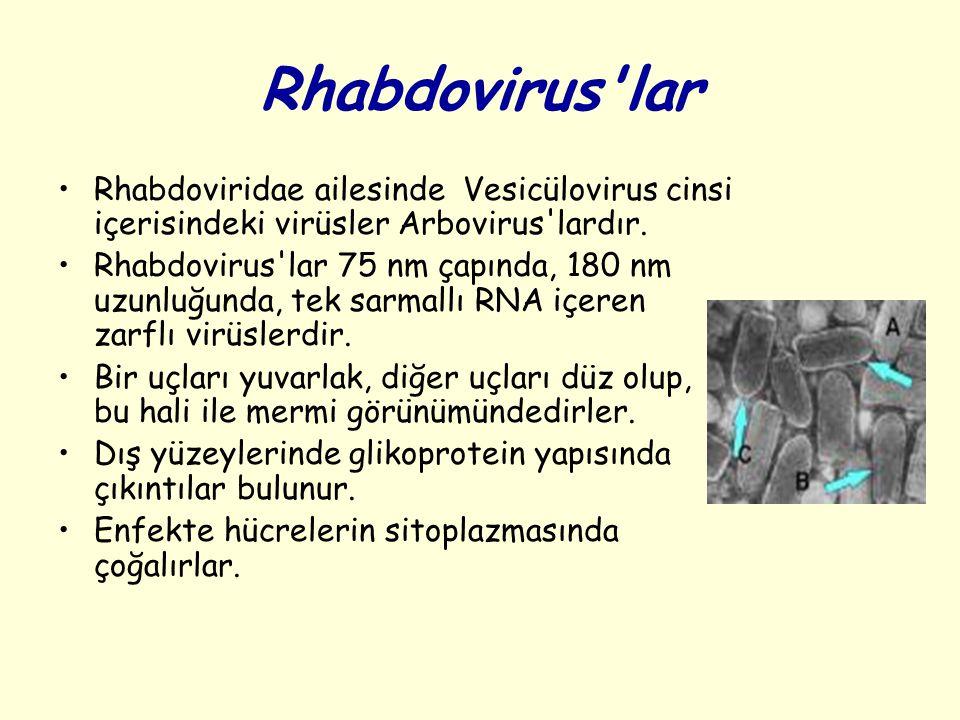 Rhabdovirus'lar Rhabdoviridae ailesinde Vesicülovirus cinsi içerisindeki virüsler Arbovirus'lardır. Rhabdovirus'lar 75 nm çapında, 180 nm uzunluğunda,