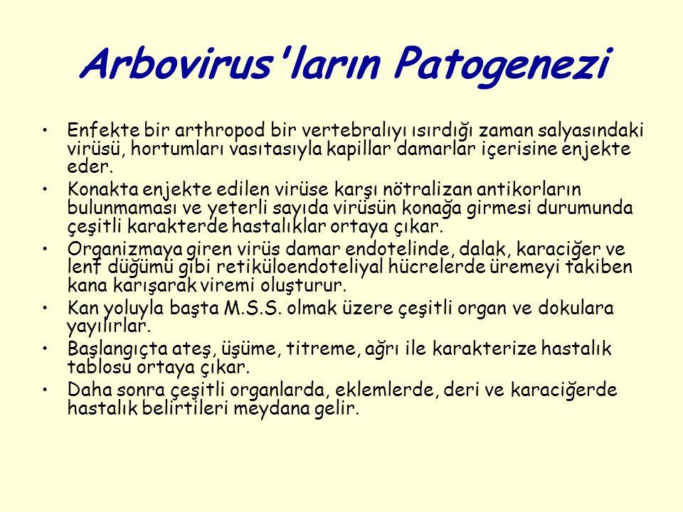Arbovirus'ların Patogenezi Enfekte bir arthropod bir vertebralıyı ısırdığı zaman salyasındaki virüsü, hortumları vasıtasıyla kapillar damarlar içerisi