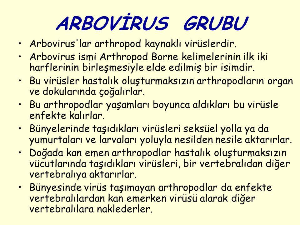 ARBOVİRUS GRUBU Arbovirus'lar arthropod kaynaklı virüslerdir. Arbovirus ismi Arthropod Borne kelimelerinin ilk iki harflerinin birleşmesiyle elde edil