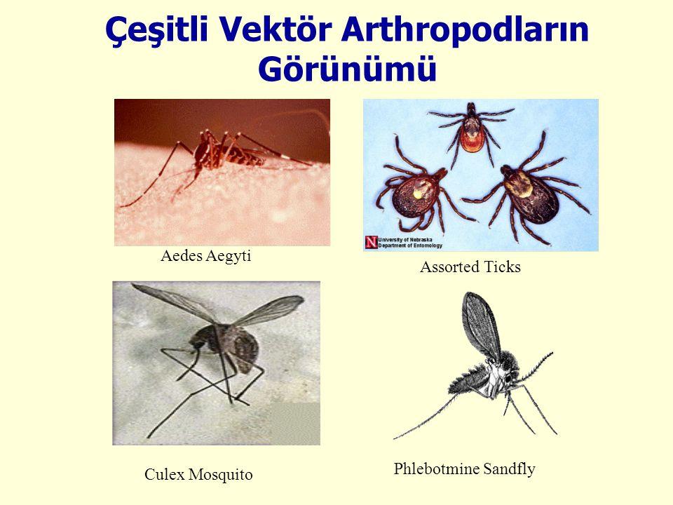 Çeşitli Vektör Arthropodların Görünümü Aedes Aegyti Assorted Ticks Phlebotmine Sandfly Culex Mosquito