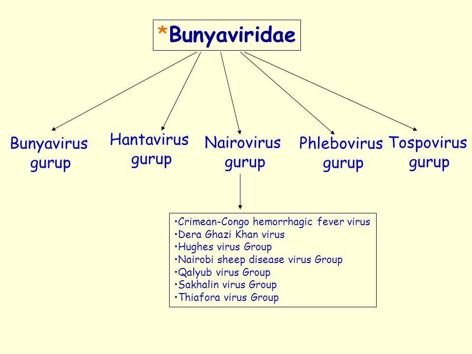 *Bunyaviridae Bunyavirus gurup Hantavirus gurup Nairovirus gurup Phlebovirus gurup Tospovirus gurup Crimean-Congo hemorrhagic fever virus Dera Ghazi K