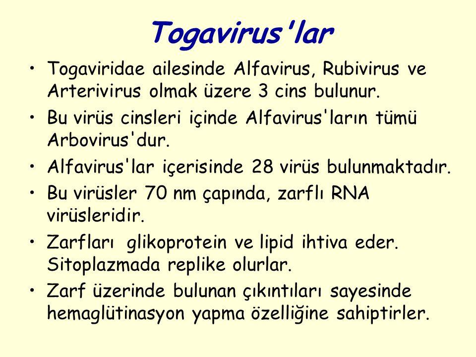 Togavirus'lar Togaviridae ailesinde Alfavirus, Rubivirus ve Arterivirus olmak üzere 3 cins bulunur. Bu virüs cinsleri içinde Alfavirus'ların tümü Arbo