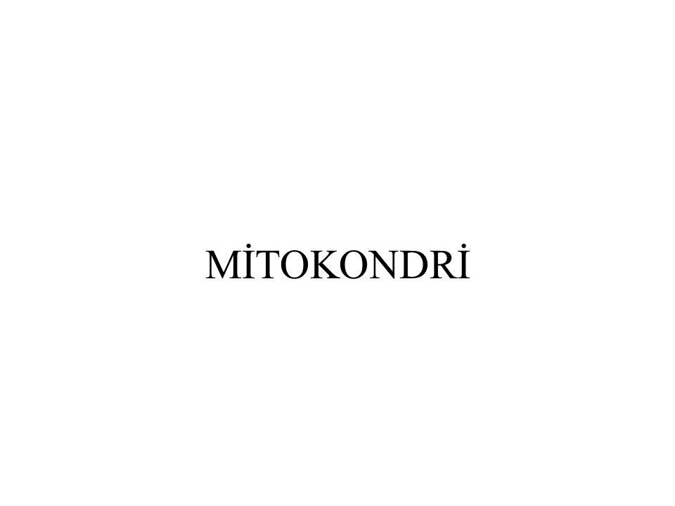 MİTOKONDRİ