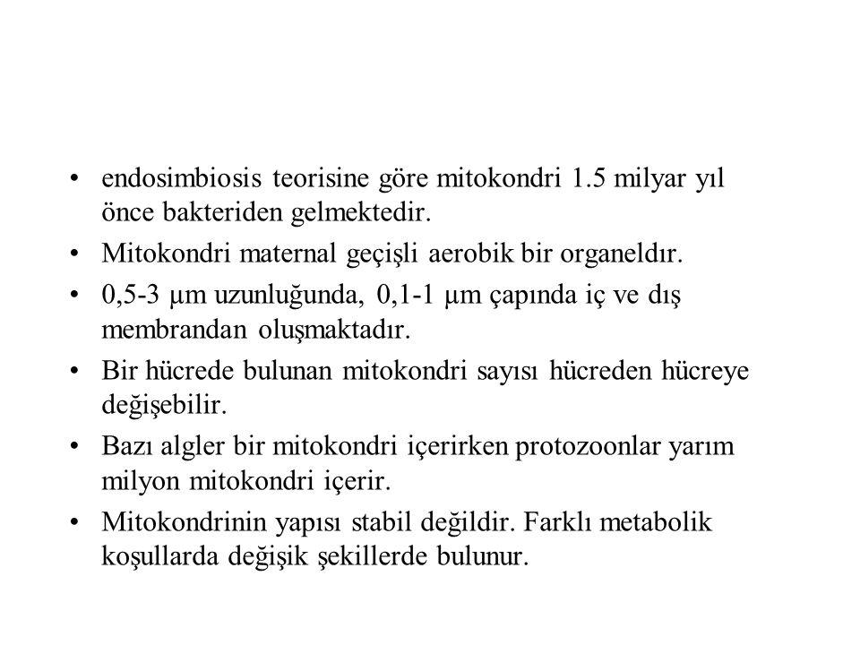 Mitokondriyal hastalıklarda...