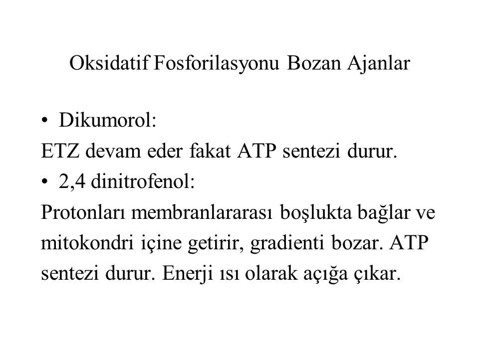 Oksidatif Fosforilasyonu Bozan Ajanlar Dikumorol: ETZ devam eder fakat ATP sentezi durur.