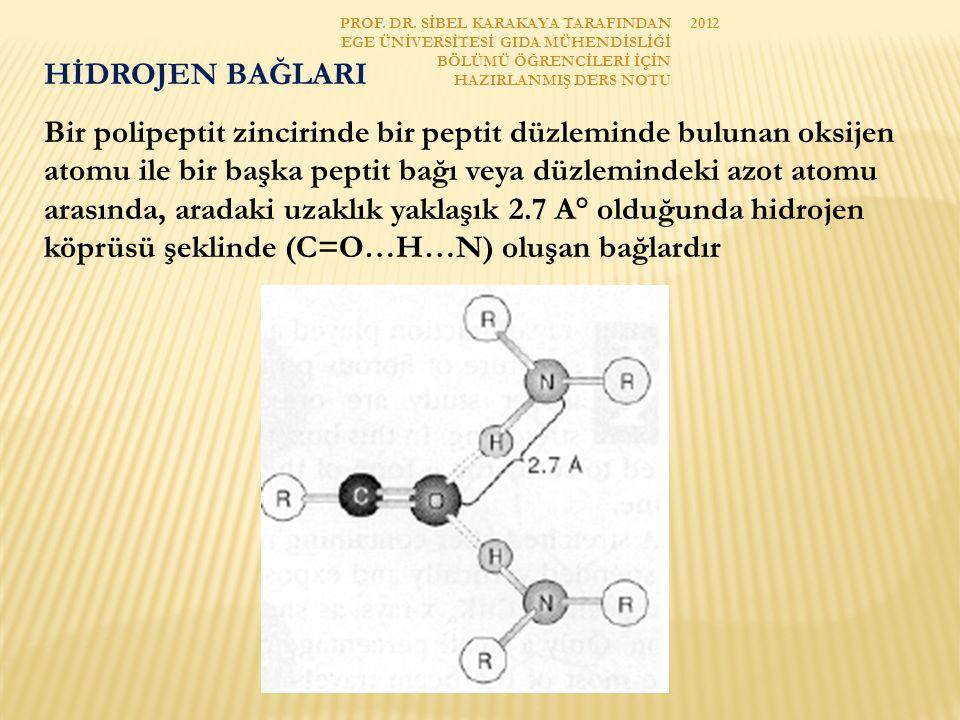 İYON BAĞLARI Polipeptit zincirindeki asidik ve bazik amino asitlerin fonksiyonel gruplarının fizyolojik pH'da tamamen veya kısmen iyonlaşmış halde bulunmaları nedeniyle elektronegatif ve elektropozitif gruplar arasında oluşan elektrostatik çekim kuvveti ile (COO-...H 3 N + ) oluşan bağlardır.