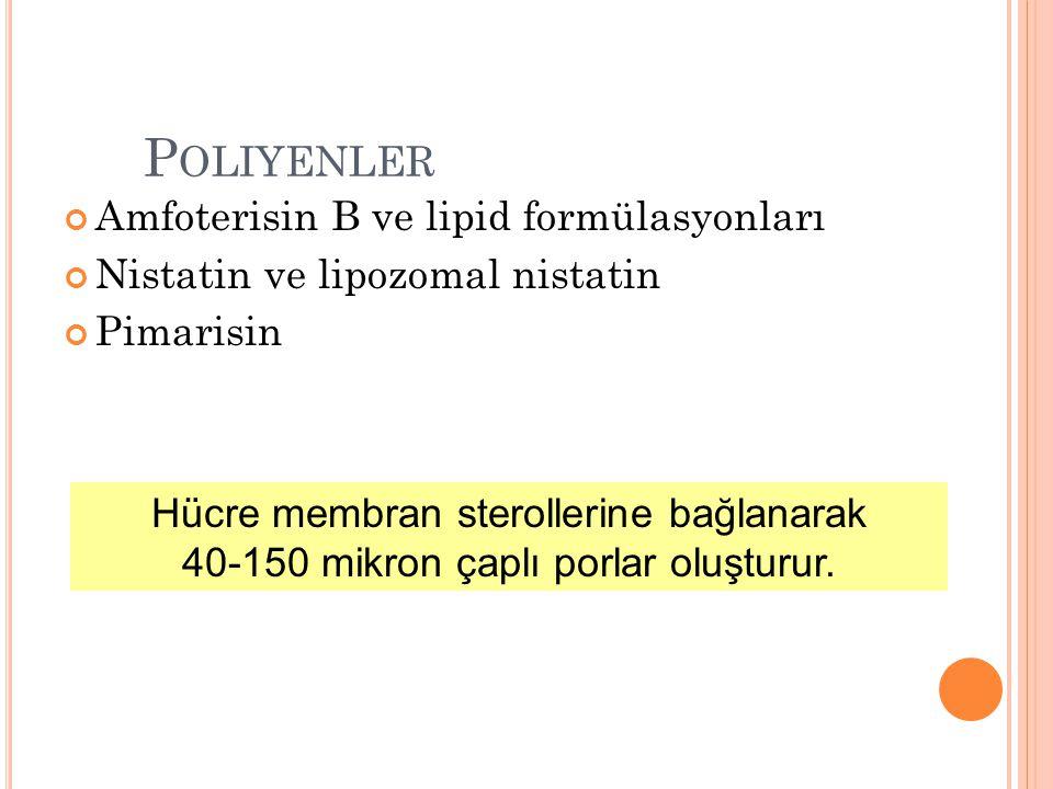 Squalen Squalen-2,3-epoksit Lanosterol Ergosterol Azoller 14  demetilaz Squalen epoksidaz Alilaminler Morfolinler  14 redüktaz  7-8 izomeraz