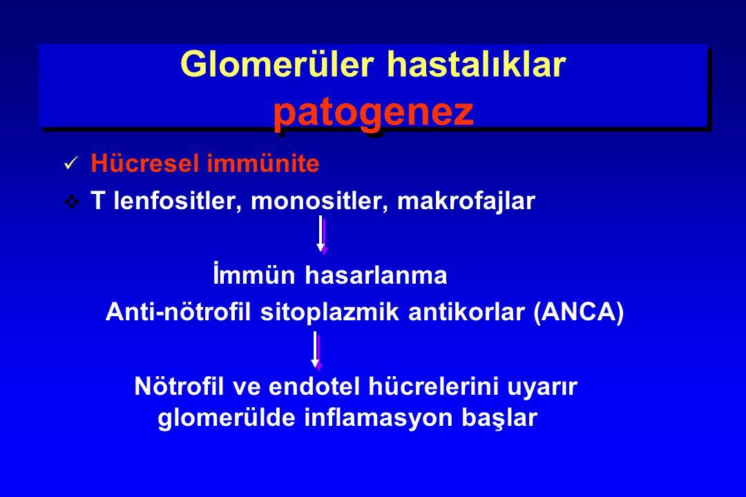 Glomerüler hastalıklar patogenez Hücresel immünite  T lenfositler, monositler, makrofajlar İmmün hasarlanma Anti-nötrofil sitoplazmik antikorlar (ANC