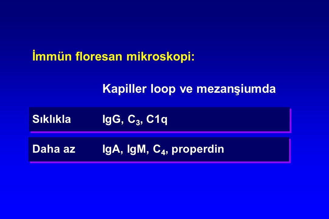 İmmün floresan mikroskopi: Kapiller loop ve mezanşiumda Sıklıkla IgG, C 3, C1q Daha azIgA, IgM, C 4, properdin