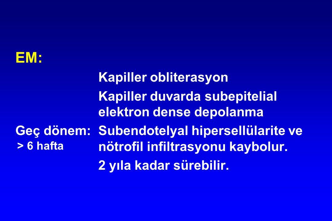EM: Kapiller obliterasyon Kapiller duvarda subepitelial elektron dense depolanma Geç dönem:Subendotelyal hipersellülarite ve nötrofil infiltrasyonu ka