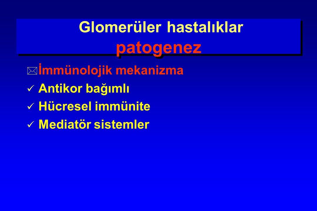 Glomerüler hastalıklar patogenez Antikor bağımlı + = İmmün kompleks glomerülonefriti Dolaşan antikor Dolaşan antikor Dolaşan antijen Dolaşan antijen İmmün kompleks İmmün kompleks