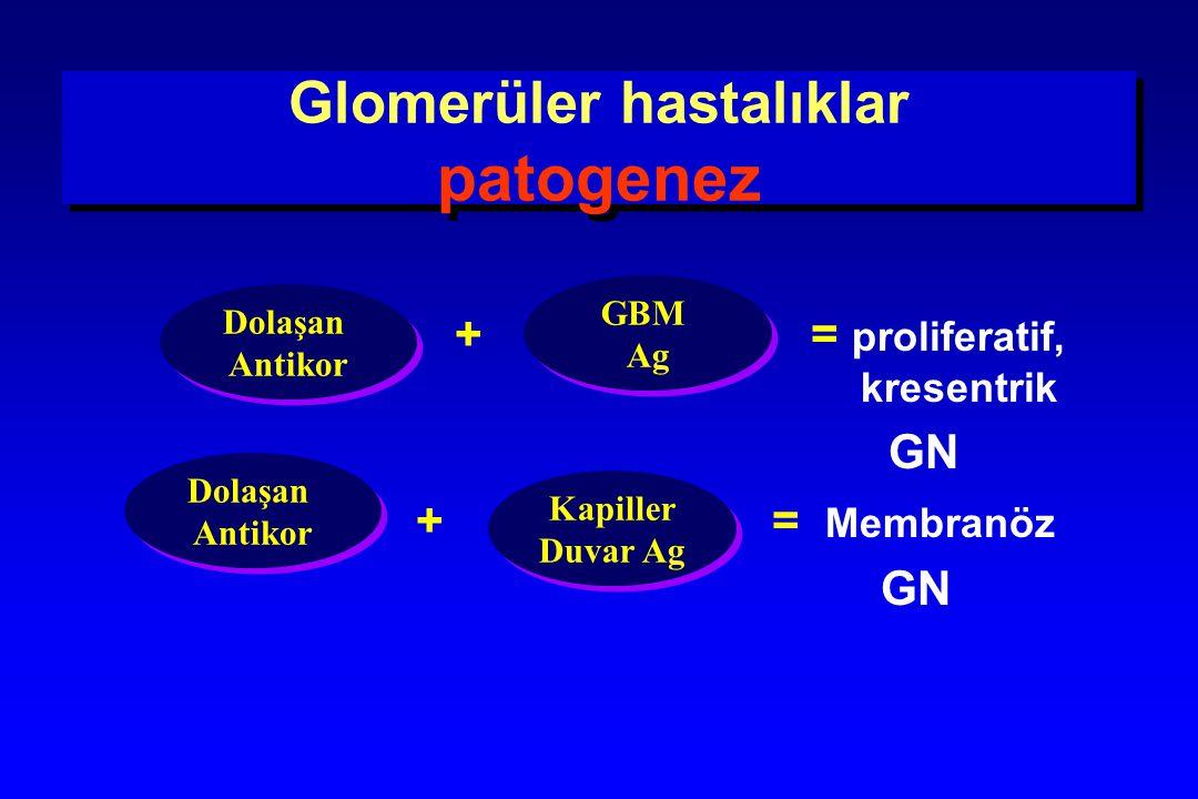 Glomerüler hastalıklar patogenez + = proliferatif, kresentrik GN + = Membranöz GN Dolaşan Antikor Dolaşan Antikor GBM Ag GBM Ag Kapiller Duvar Ag Kapi