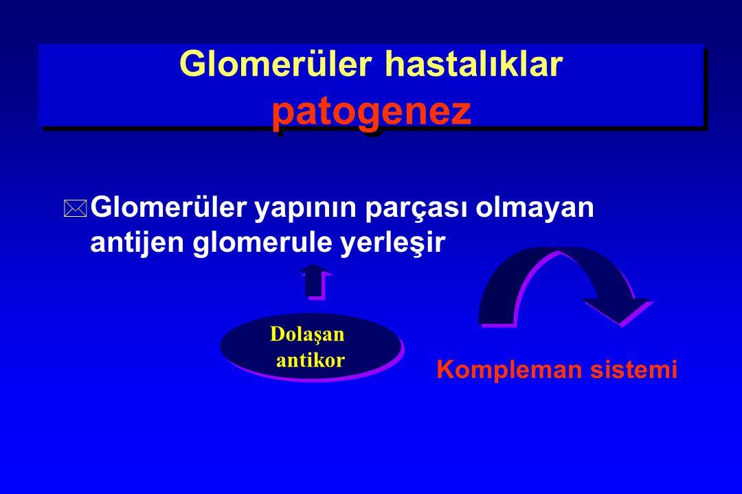 Glomerüler hastalıklar patogenez * Glomerüler yapının parçası olmayan antijen glomerule yerleşir Kompleman sistemi Dolaşan antikor Dolaşan antikor