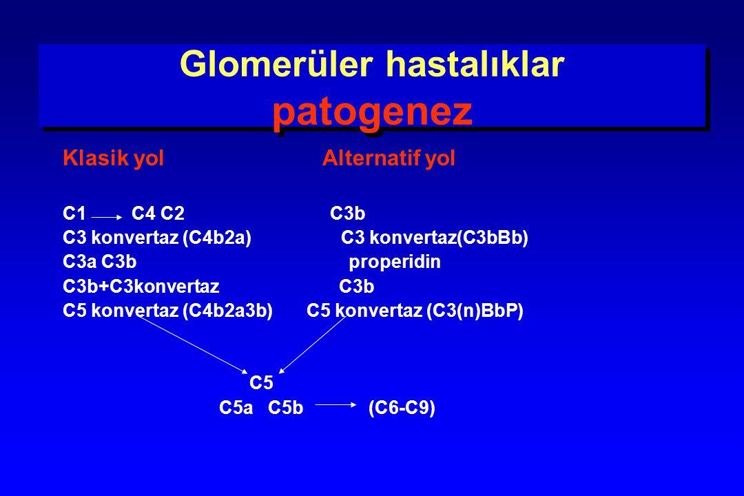 Glomerüler hastalıklar patogenez Hücresel immünite  T lenfositler, monositler, makrofajlar İmmün hasarlanma Anti-nötrofil sitoplazmik antikorlar (ANCA) Nötrofil ve endotel hücrelerini uyarır glomerülde inflamasyon başlar