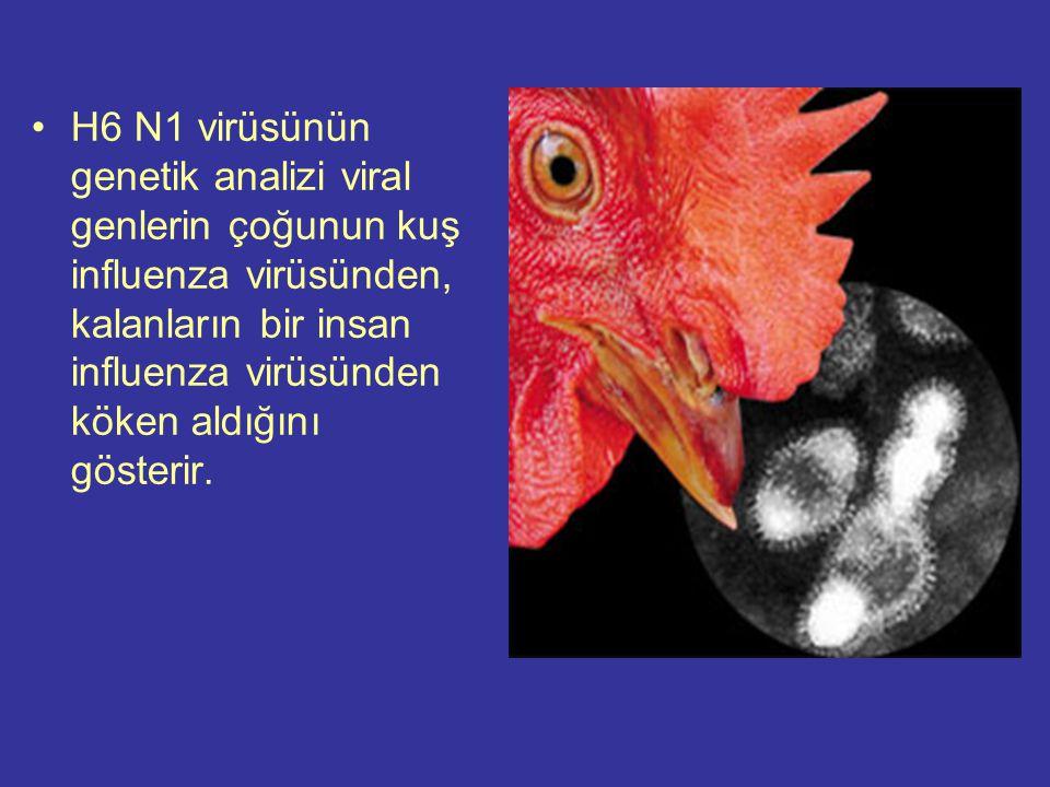 H6 N1 virüsünün genetik analizi viral genlerin çoğunun kuş influenza virüsünden, kalanların bir insan influenza virüsünden köken aldığını gösterir.
