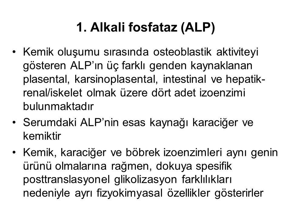 1. Alkali fosfataz (ALP) Kemik oluşumu sırasında osteoblastik aktiviteyi gösteren ALP'ın üç farklı genden kaynaklanan plasental, karsinoplasental, int