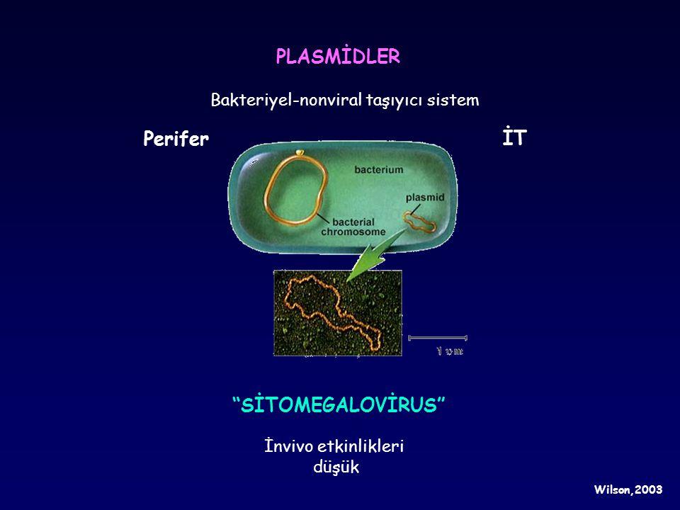 """PLASMİDLER Bakteriyel-nonviral taşıyıcı sistem İnvivo etkinlikleri düşük """"SİTOMEGALOVİRUS"""" Perifer İT Wilson,2003"""