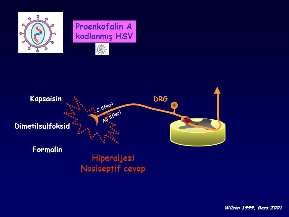 DRG Dimetilsulfoksid Formalin Hiperaljezi Nosiseptif cevap Wilson 1999, Goss 2001 C lifleri Aδ lifleri Kapsaisin Proenkafalin A kodlanmış HSV