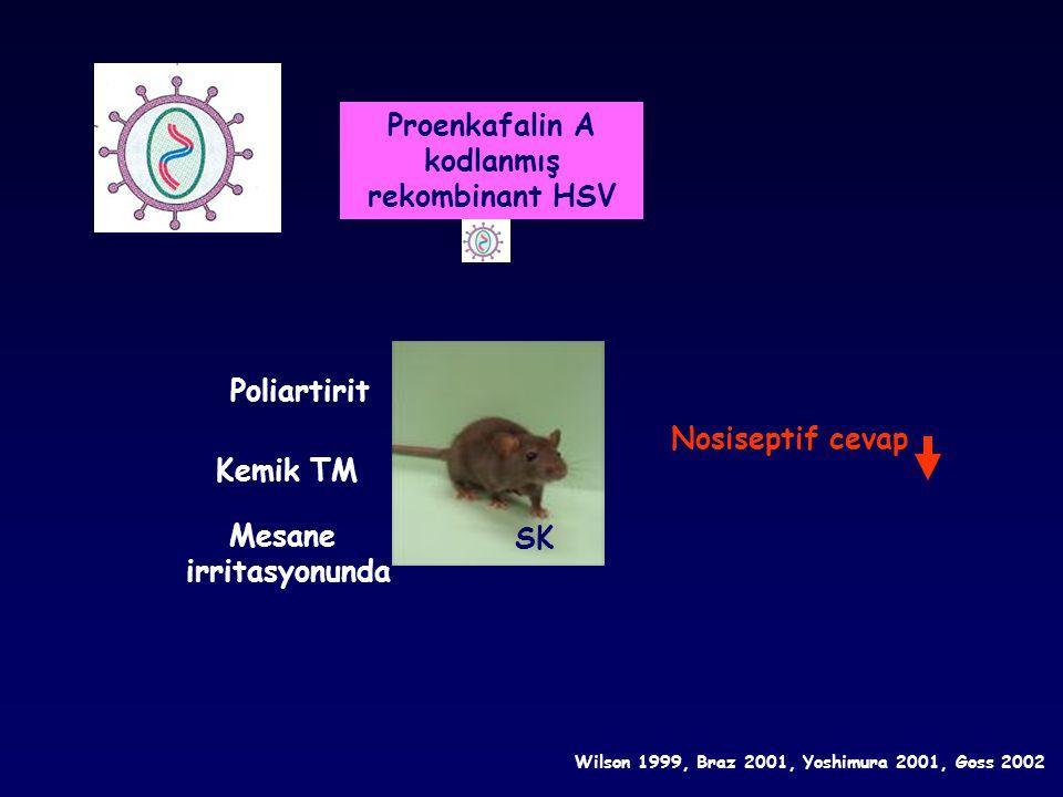 SK Mesane irritasyonunda Poliartirit Nosiseptif cevap Kemik TM Wilson 1999, Braz 2001, Yoshimura 2001, Goss 2002 Proenkafalin A kodlanmış rekombinant