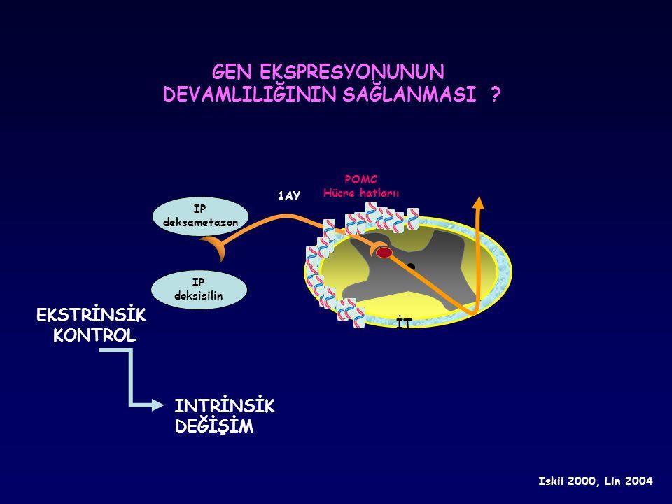 İT IP deksametazon POMC Hücre hatlarıı Iskii 2000, Lin 2004 IP doksisilin 1AY GEN EKSPRESYONUNUN DEVAMLILIĞININ SAĞLANMASI ? INTRİNSİK DEĞİŞİM EKSTRİN
