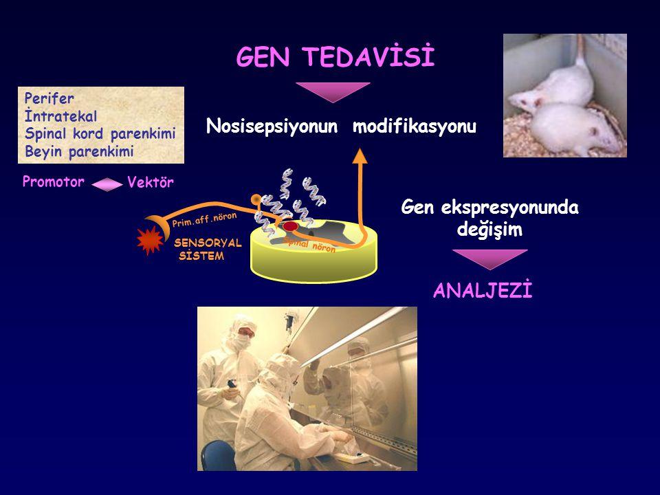 GEN TEDAVİSİ SENSORYAL SİSTEM ANALJEZİ Gen ekspresyonunda değişim Nosisepsiyonun modifikasyonu Prim.aff.nöron Spinal nöron Perifer İntratekal Spinal k