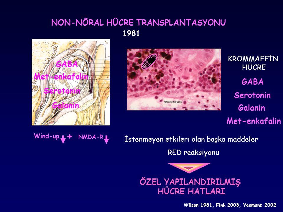 ÖZEL YAPILANDIRILMIŞ HÜCRE HATLARI 7 hafta 2-3 hafta Embriyo fare nöronu Hagihara 1997, Eaton 1999, Cesaj 2000, Stubley 2001, Hains 2001 Nöropatik ağrı modeli (CCI) Piamater implantasyonu POMC GAD Serotonin pr.