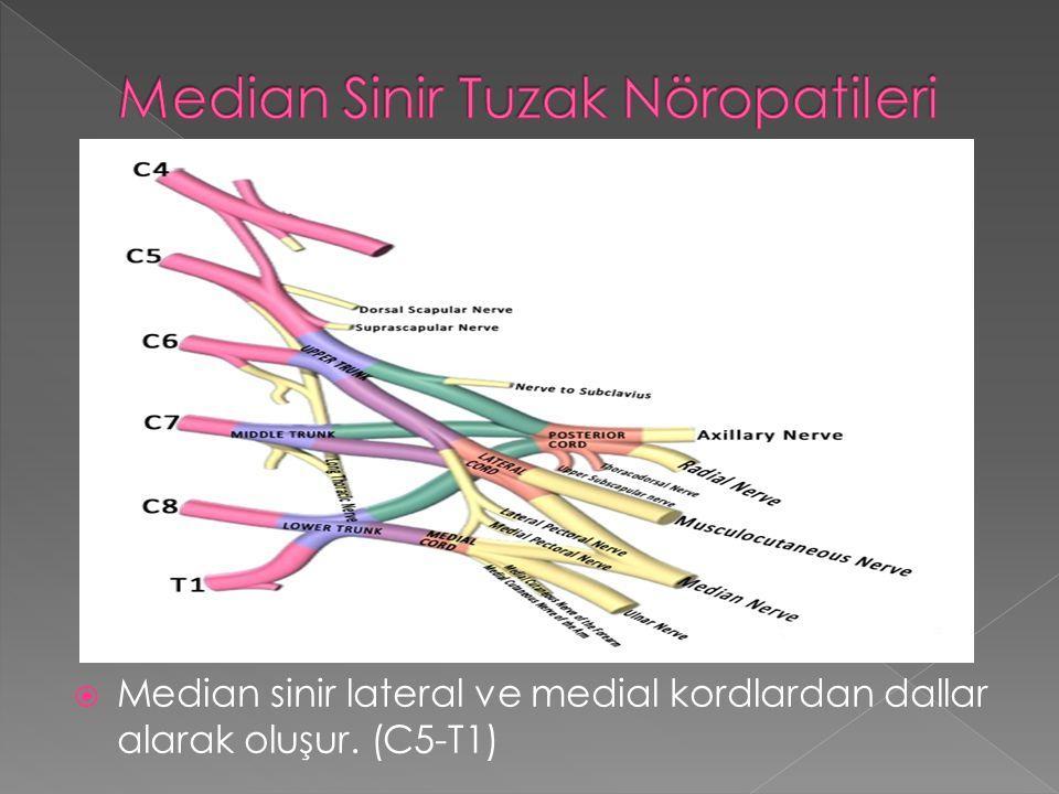  Median sinir lateral ve medial kordlardan dallar alarak oluşur. (C5-T1)