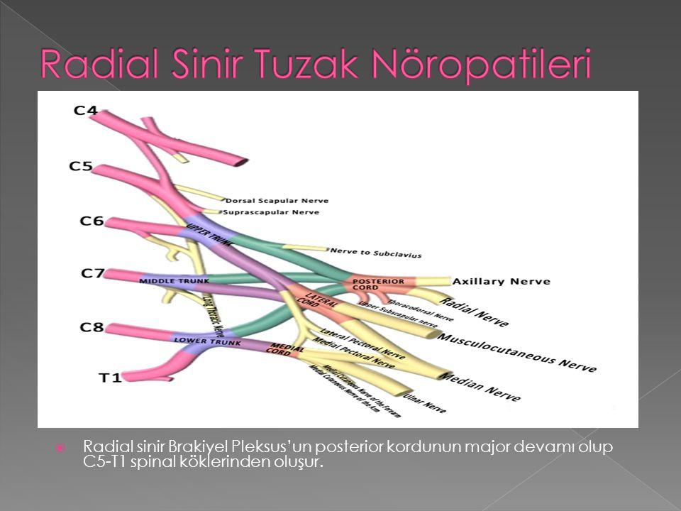  Radial sinir Brakiyel Pleksus'un posterior kordunun major devamı olup C5-T1 spinal köklerinden oluşur.