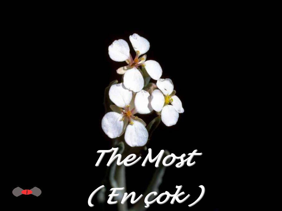 The Most ( En çok )